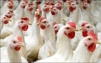 لاہوریوں کیلئے خوشخبری، مرغی کا گوشت سستا ہوگیا