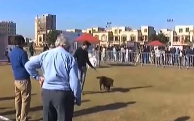 رائل کینل کلب کی جانب سے بحریہ ٹاؤن کرکٹ سٹیڈیم میں ڈوگ شو کا انعقاد