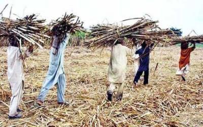 چیف جسٹس پاکستان نے شوگرملز مالکان کو کاشتکاروں کے واجبات کی ادائیگی کیلئے ڈیڈ لائن دیدی