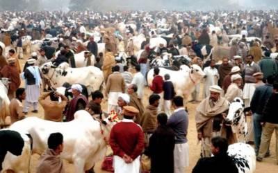 لاہور میں مویشی منڈیاں لگانے کے انتظامات مکمل، افسران کی چھٹیاں منسوخ