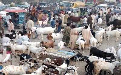 غیر قانونی مویشی منڈیوں کی شامت آگئی