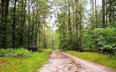 محکمہ جنگلات کی زمینیں واگزار کرانے کیلئے گرینڈ آپریشن کا فیصلہ