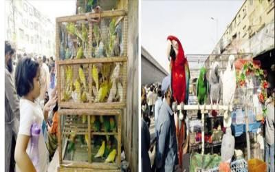 پرندے پالنے کا شوق اب کاروبار میں تبدیل