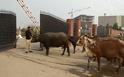 انسان تو انسان جانور بھی اپنی فریاد لیکر نیب لاہور پہنچ گئے