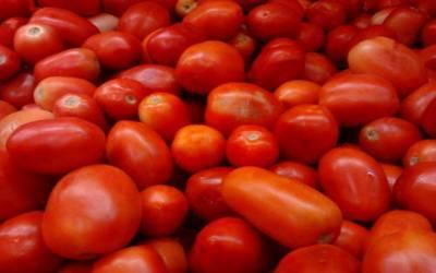 ٹماٹر سستے ہوگئے