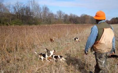 سوشل میڈیا پر متحرک غیر قانونی شکاریوں کیخلاف کارروائی کا فیصلہ
