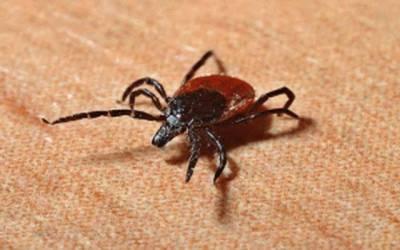 شہر میں کانگو وائرس کا خطرہ، الرٹ جاری