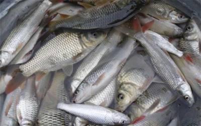 مچھلی کے شکار پر پابندی عائد