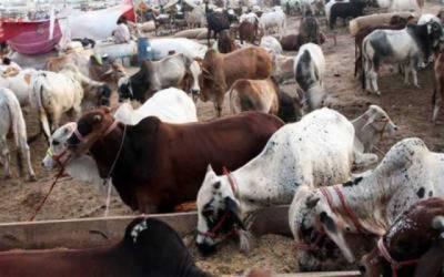 7 مویشی منڈیوں کے قیام پر 14 کروڑ لاگت آئے گی
