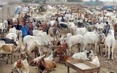 مویشی منڈیوں کیلئے سکیورٹی پلان تشکیل