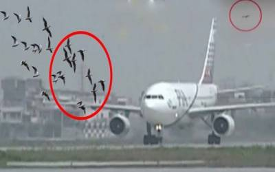 ایئرپورٹ پر طیاروں سے پرندے ٹکرانے کے واقعات میں اضافہ