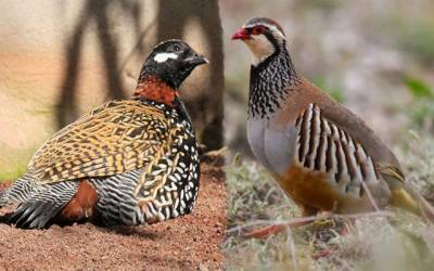 نایاب پرندوں کی غیر قانونی فروخت کرنے والا گروہ گرفتار