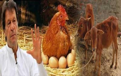 وزیر اعظم مرغی پال اور کٹا بچاؤ پروگرام کیلئے32 کروڑ جاری