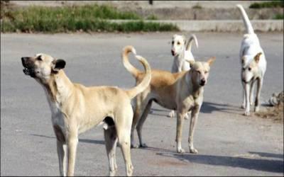 انتظامیہ نے آوارہ کتوں کے خاتمہ کیلئے نیا پلان تیار کرلیا