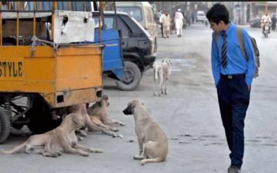 آوارہ کتوں کی بھرمار، انتظامیہ لاچار، مزید 116 کیسز رپورٹ