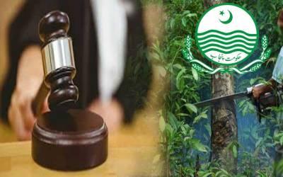 لاہور ہائیکورٹ نے پنجاب حکومت کو درختوں کی کٹائی سے روک دیا