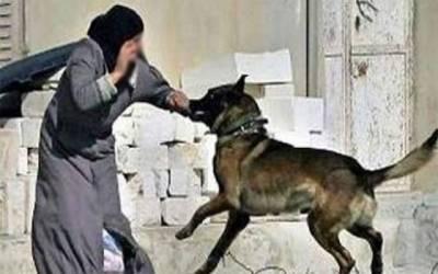 ضلعی انتظامیہ ناکام، آوارہ کتوں کےشہریوں پر وار جاری