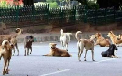کتوں نے شہریوں کی زندگی اجیرن کردی