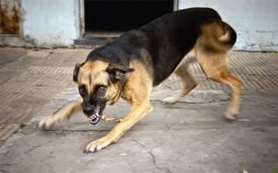 آوارہ کتوں کے شہریوں پر وار جاری، مزید 79 افراد شکار