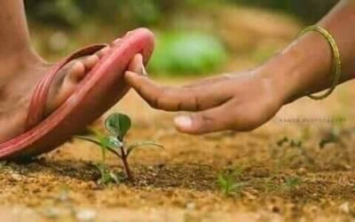 وزیراعظم نے عثمان بزدار کو 10 کروڑ درخت لگانے کا ٹاسک دے دیا