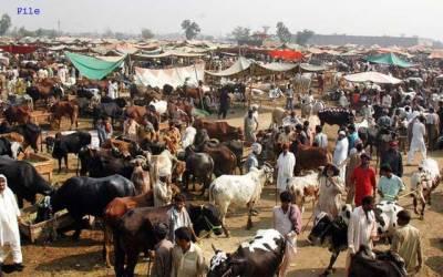 مویشی منڈیوں میں قربان گاہیں بنانے کی تجویز