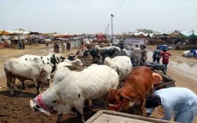 عید الاضحٰی سے قبل شہر میں چودہ مویشی منڈیوں کی تیاریاں مکمل