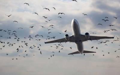 لاہور میں پرندوں کے جھنڈ پروازوں کیلئے خطرہ بن گئے