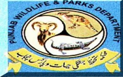 پنجاب وائلڈلائف نے پنجاب اڑیال کی ٹرافی ہنٹنگ کے شیڈول کا اعلان کردیا