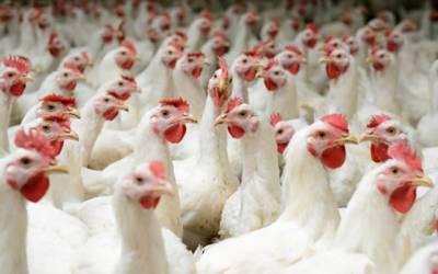 برائلر گوشت کی قیمت میں 65روپے کا اضافہ