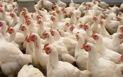 مرغی کے گوشت کی قیمتوں میں حیران کن اضافہ