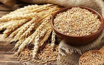 Punjab govt Wheat procurement campaign