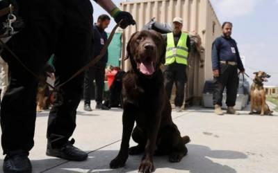 امریکی تربیت یافتہ کتوں کو نئے مالک مل گئے