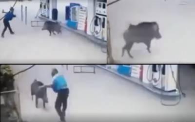 پٹرول مہنگا ہونے پر جنگلی جانور آپے سے باہر؛ پٹرول پمپ پر حملے کی ویڈیو