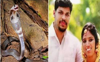 Man killed his wife with snake